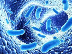 Lợi khuẩn probiotic là gì? Những đối tượng nào cần bổ sung lợi khuẩn với hệ tiêu hóa